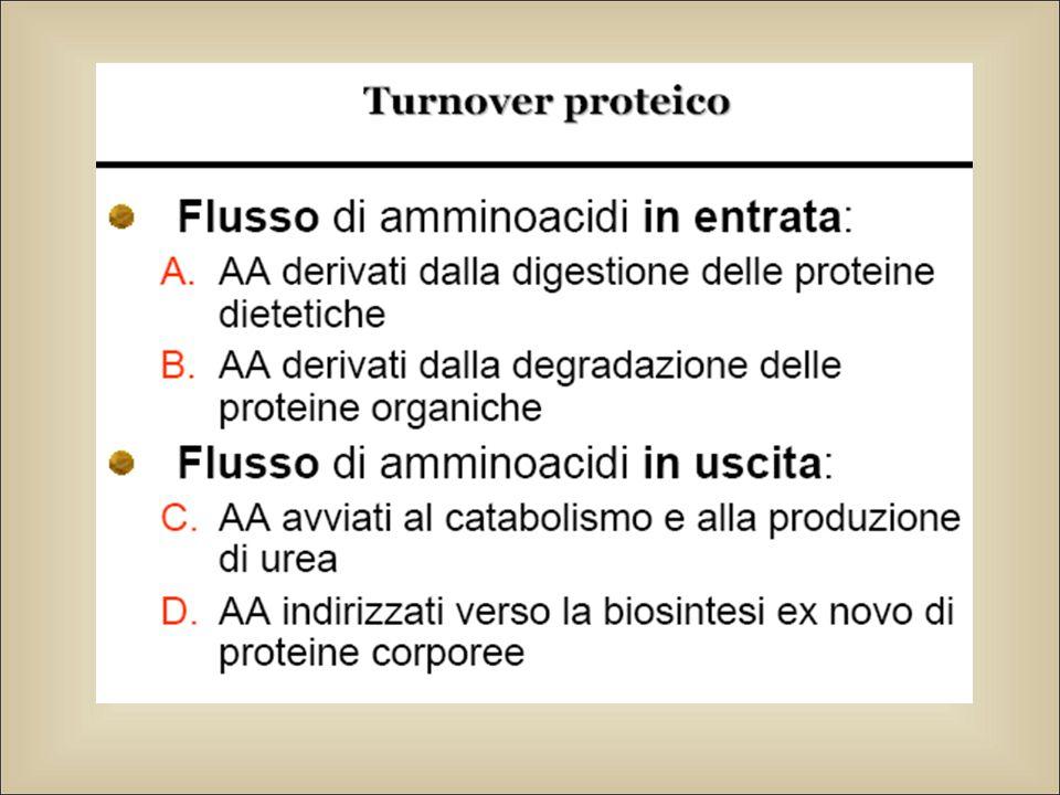 Amino acidi essenziali e non Per la sintesi proteica devono essere disponibili tutti e 20 gli amino acidi naturali Alcuni amino acidi non possono essere sintetizzati e devono essere introdotti con la dieta (aa essenziali) La fenilalanina è necessaria per la sintesi degli ormoni tiroidei e dell'adrenalina
