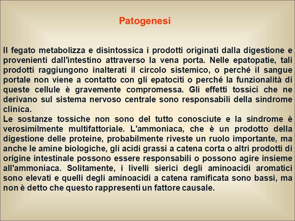 Patogenesi Il fegato metabolizza e disintossica i prodotti originati dalla digestione e provenienti dall intestino attraverso la vena porta.