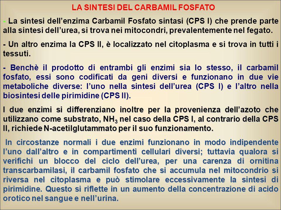 LA SINTESI DEL CARBAMIL FOSFATO - La sintesi dell'enzima Carbamil Fosfato sintasi (CPS I) che prende parte alla sintesi dell'urea, si trova nei mitoco