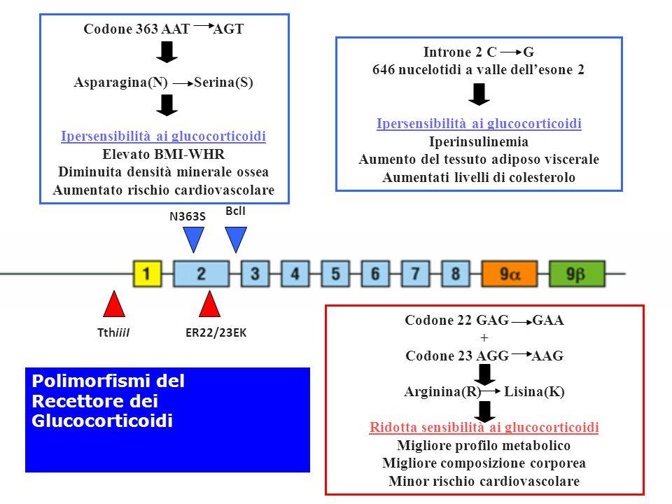 TthiiiIER22/23EK N363S BclI Codone 363 AAT AGT Asparagina(N) Serina(S) Ipersensibilità ai glucocorticoidi Elevato BMI-WHR Diminuita densità minerale o