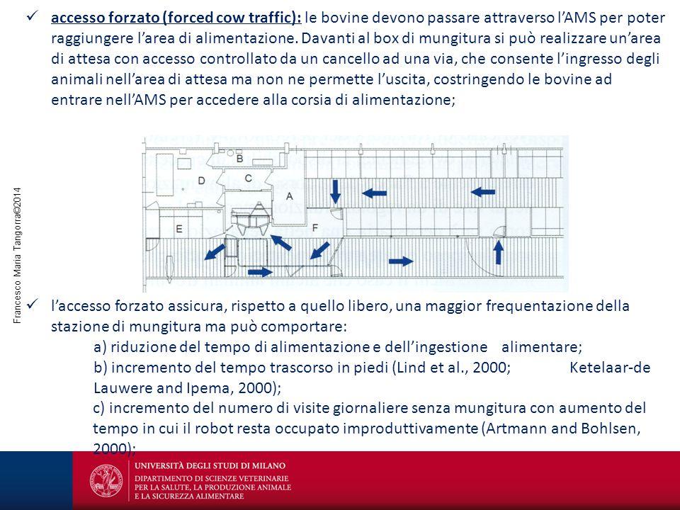 Francesco Maria Tangorra©2014 accesso forzato (forced cow traffic): le bovine devono passare attraverso l'AMS per poter raggiungere l'area di alimenta