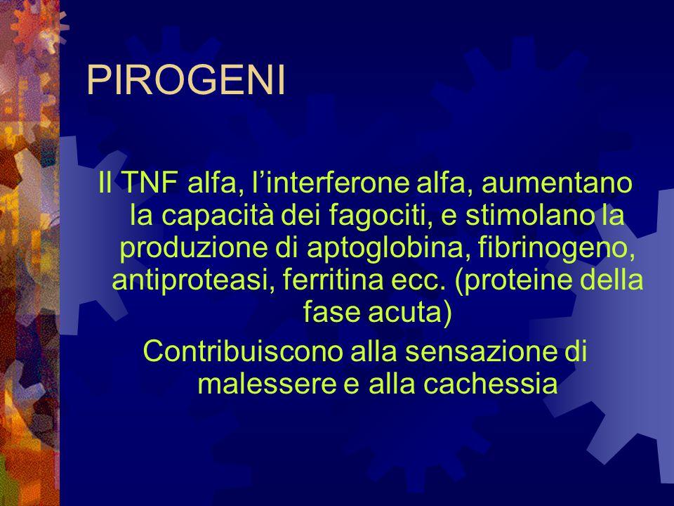 PIROGENI Il TNF alfa, l'interferone alfa, aumentano la capacità dei fagociti, e stimolano la produzione di aptoglobina, fibrinogeno, antiproteasi, fer