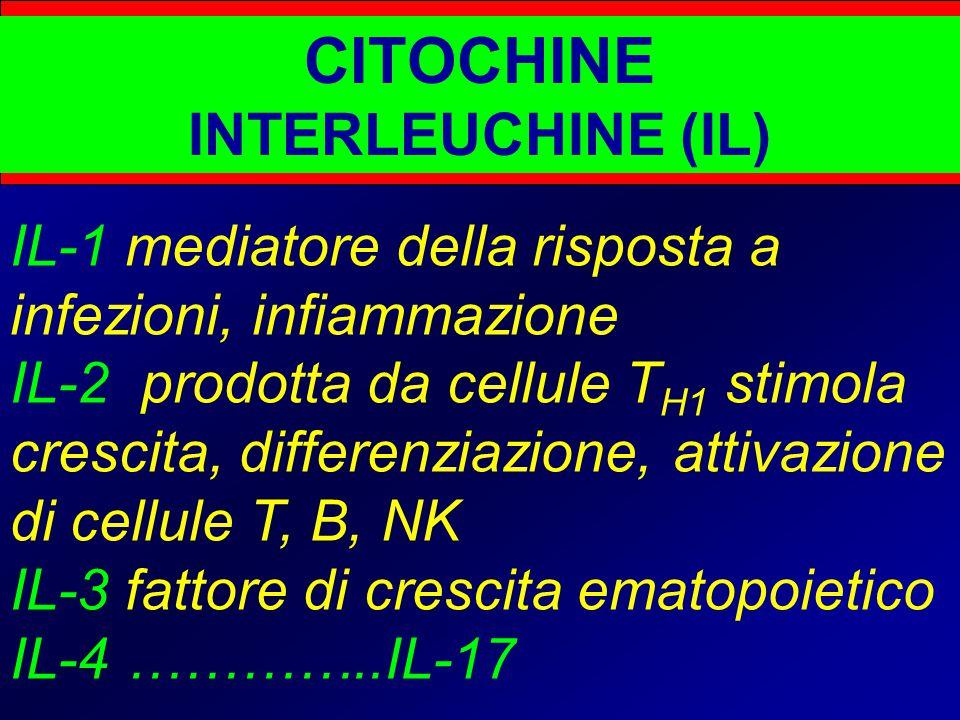 CITOCHINE INTERLEUCHINE (IL) IL-1 mediatore della risposta a infezioni, infiammazione IL-2 prodotta da cellule T H1 stimola crescita, differenziazione, attivazione di cellule T, B, NK IL-3 fattore di crescita ematopoietico IL-4 …………..IL-17