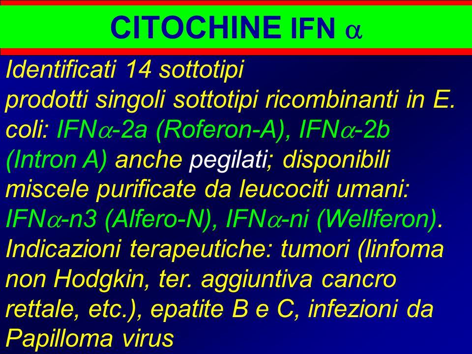 CITOCHINE IFN  Identificati 14 sottotipi prodotti singoli sottotipi ricombinanti in E. coli: IFN  -2a (Roferon-A), IFN  -2b (Intron A) anche pegila