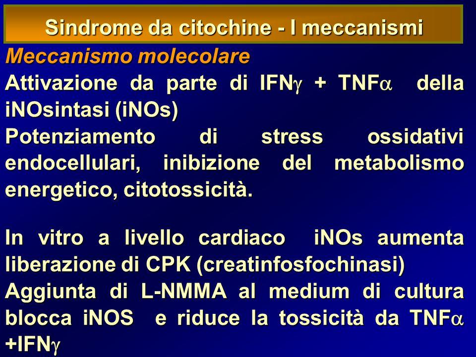 Sindrome da citochine - I meccanismi Meccanismo molecolare Attivazione da parte di IFN  + TNF  della iNOsintasi (iNOs) Potenziamento di stress ossidativi endocellulari, inibizione del metabolismo energetico, citotossicità.
