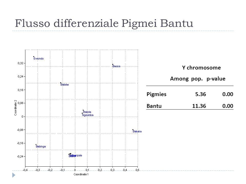 Flusso differenziale Pigmei Bantu Y chromosome Among pop.p-value Pigmies5.360.00 Bantu11.360.00