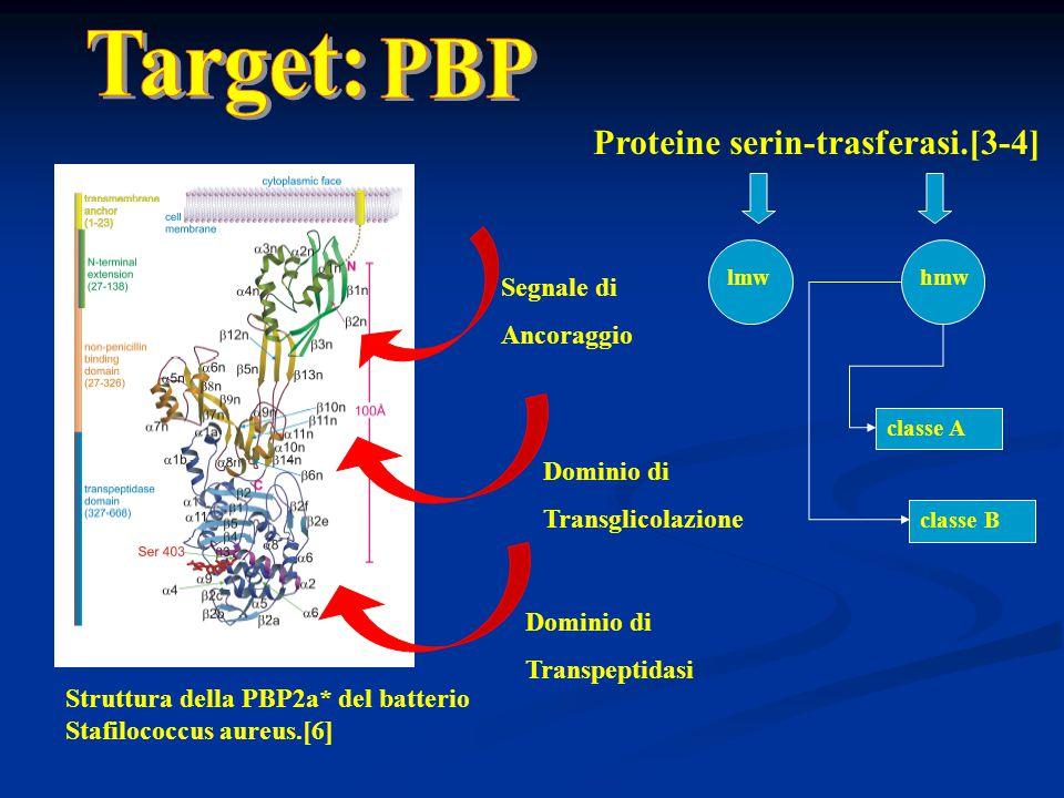 Dominio di Transglicolazione Dominio di Transpeptidasi Segnale di Ancoraggio Struttura della PBP2a* del batterio Stafilococcus aureus.[6] Proteine ser