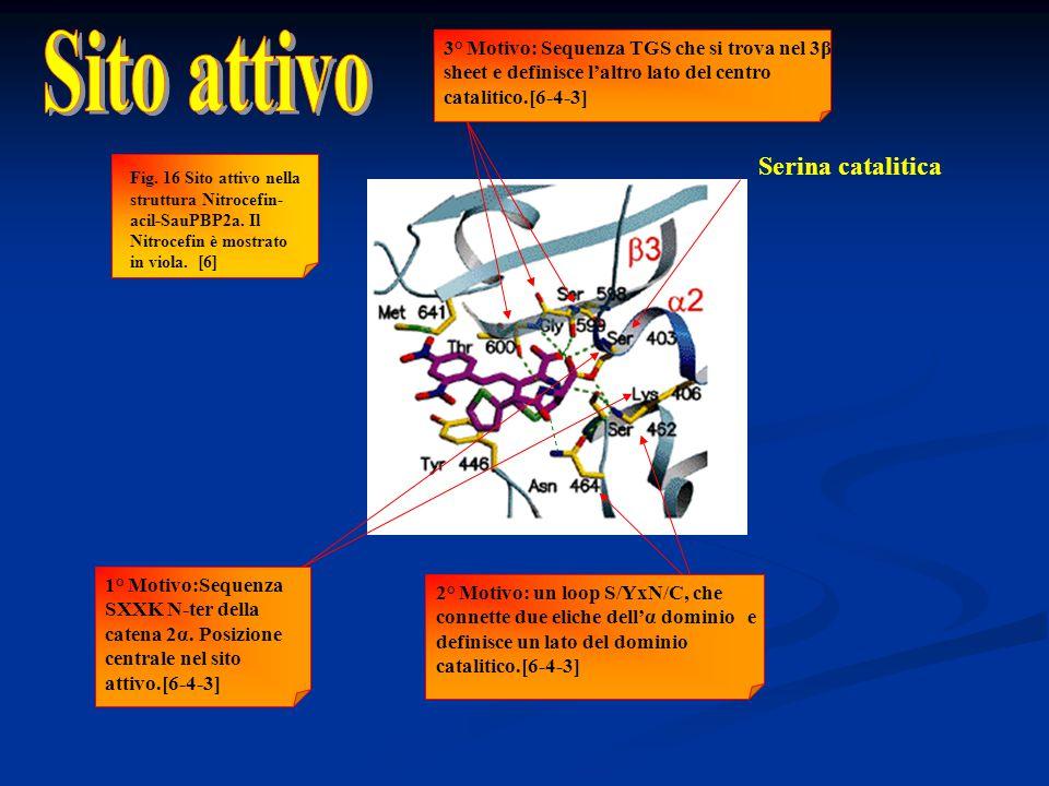 Serina catalitica 2° Motivo: un loop S/YxN/C, che connette due eliche dell'α dominio e definisce un lato del dominio catalitico.[6-4-3] 1° Motivo:Sequ