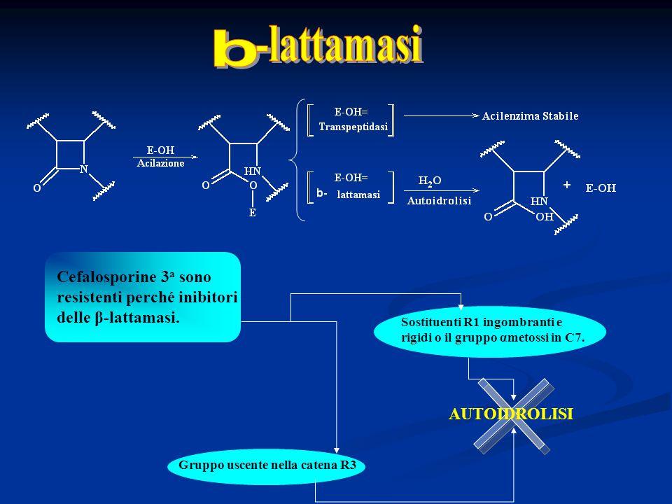 Sostituenti R1 ingombranti e rigidi o il gruppo αmetossi in C7. Gruppo uscente nella catena R3 Cefalosporine 3 a sono resistenti perché inibitori dell