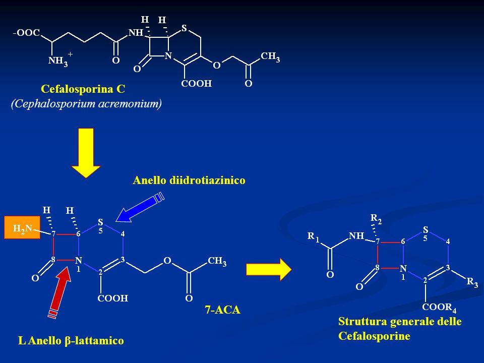 Cefalosporina C (Cephalosporium acremonium) Anello diidrotiazinico L Anello β-lattamico Struttura generale delle Cefalosporine 7-ACA