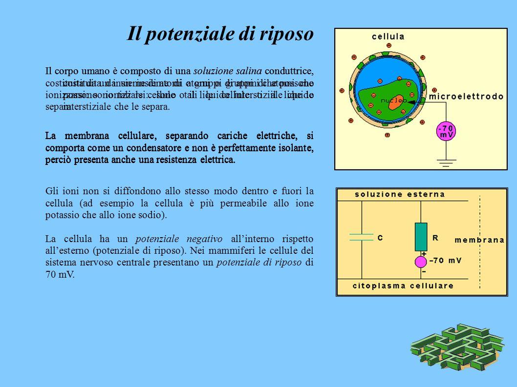 Il potenziale di riposo Il corpo umano è composto di una soluzione salina conduttrice, costituita da un insieme di atomi o gruppi di atomi che possono ionizzarsi: sono tali le cellule o il liquido interstiziale che le separa.