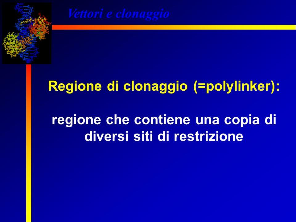 Vettori e clonaggio Regione di clonaggio (=polylinker): regione che contiene una copia di diversi siti di restrizione