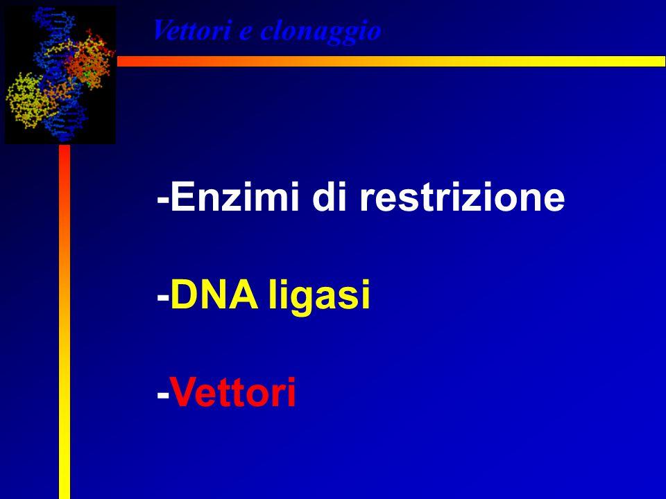 Vettori e clonaggio -Enzimi di restrizione -DNA ligasi -Vettori