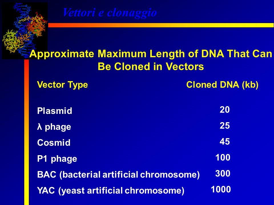 Vettori e clonaggio Vettore di espressione