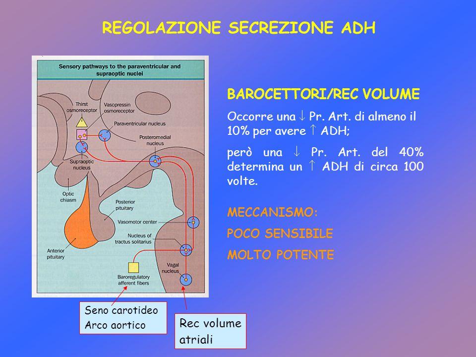 BAROCETTORI/REC VOLUME Occorre una  Pr. Art. di almeno il 10% per avere  ADH; però una  Pr. Art. del 40% determina un  ADH di circa 100 volte. Sen