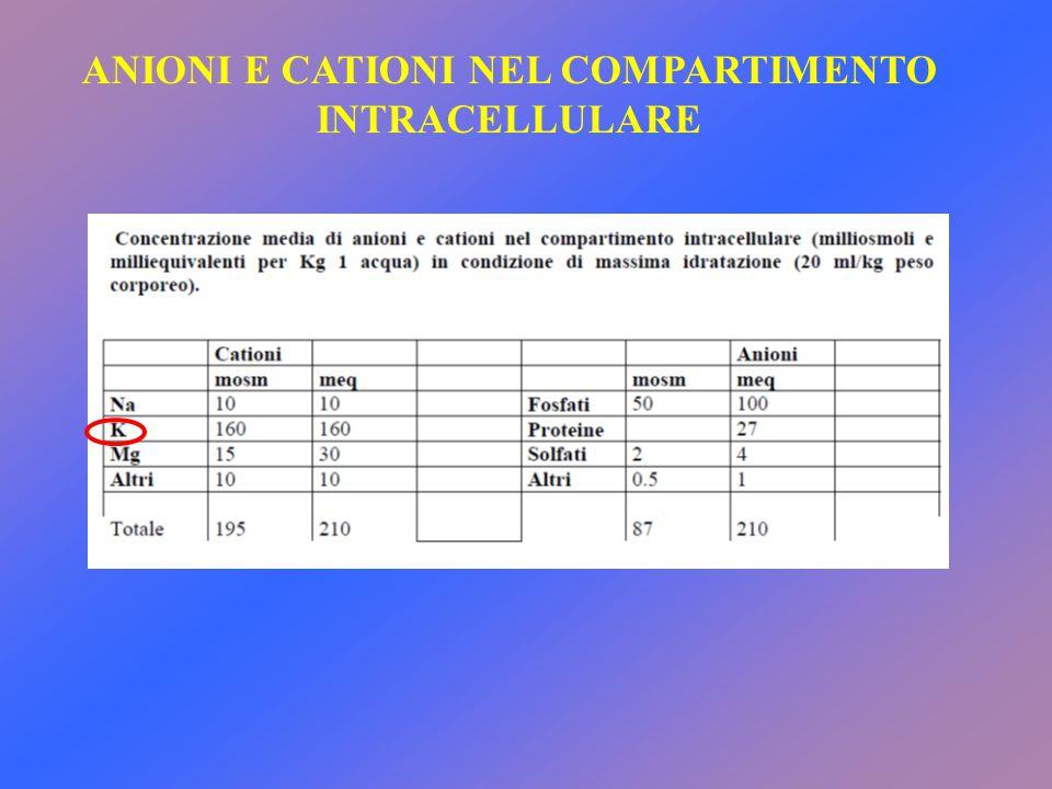 ANIONI E CATIONI NEL COMPARTIMENTO INTRACELLULARE
