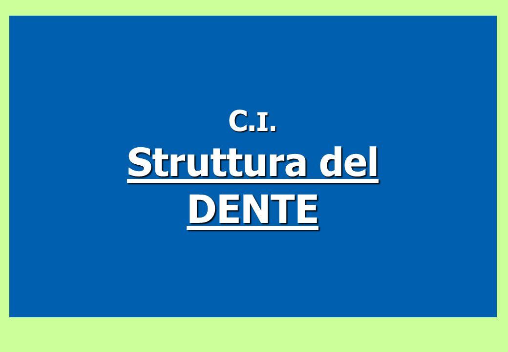 C. I. Struttura del DENTE