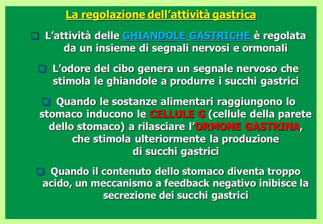 La regolazione dell'attività gastrica  L'attività delle GHIANDOLE GASTRICHE è regolata da un insieme di segnali nervosi e ormonali  L'odore del cibo