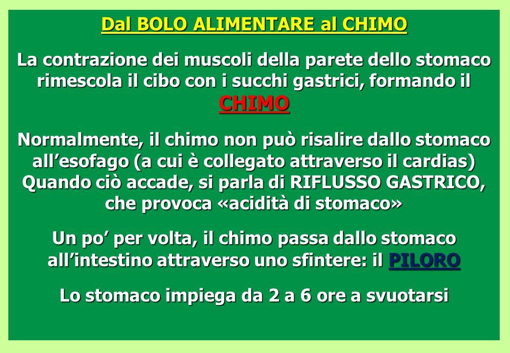 Dal BOLO ALIMENTARE al CHIMO La contrazione dei muscoli della parete dello stomaco rimescola il cibo con i succhi gastrici, formando il CHIMO Normalme