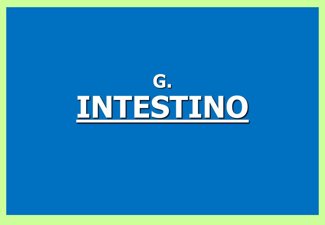G.INTESTINO