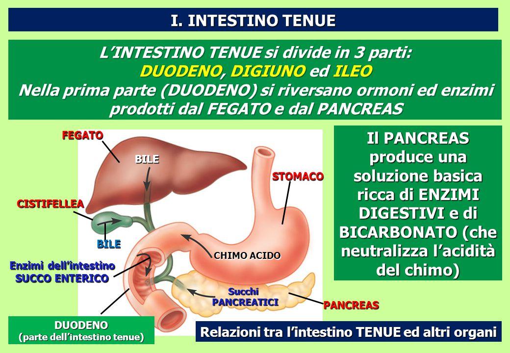 FEGATOCISTIFELLEA Enzimi dell'intestino SUCCO ENTERICO DUODENO (parte dell'intestino tenue) BILE BILE CHIMO ACIDO SucchiPANCREATICI STOMACO PANCREAS R