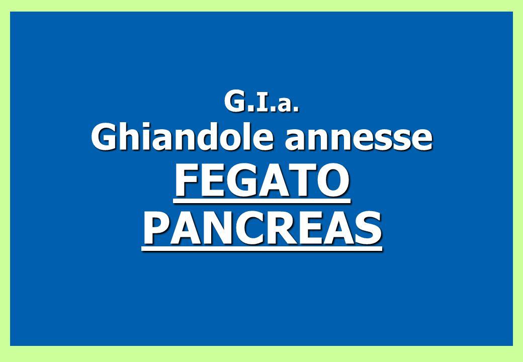 G. I. a. Ghiandole annesse FEGATOPANCREAS
