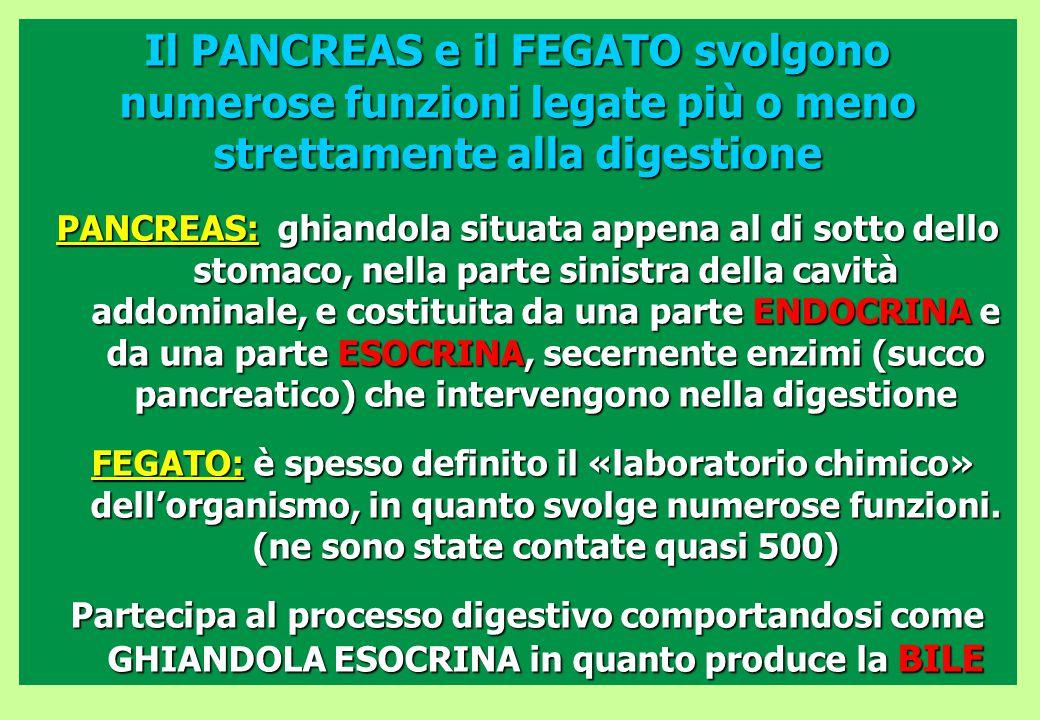 Il PANCREAS e il FEGATO svolgono numerose funzioni legate più o meno strettamente alla digestione PANCREAS: ghiandola situata appena al di sotto dello