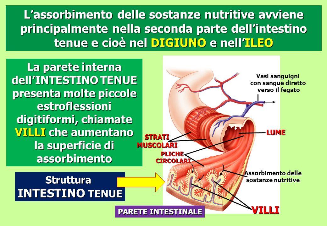 Struttura INTESTINO TENUE PLICHECIRCOLARI VILLI Assorbimento delle sostanze nutritive Vasi sanguigni con sangue diretto verso il fegato LUME PARETE IN