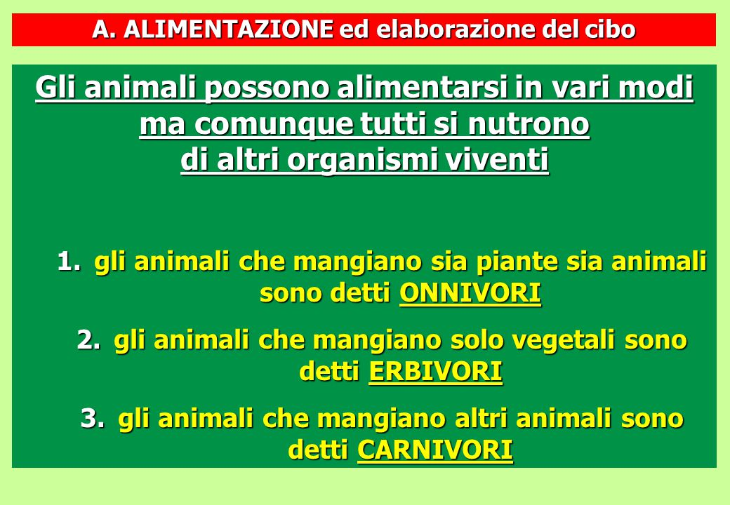 A. ALIMENTAZIONE ed elaborazione del cibo Gli animali possono alimentarsi in vari modi ma comunque tutti si nutrono di altri organismi viventi 1.gli a