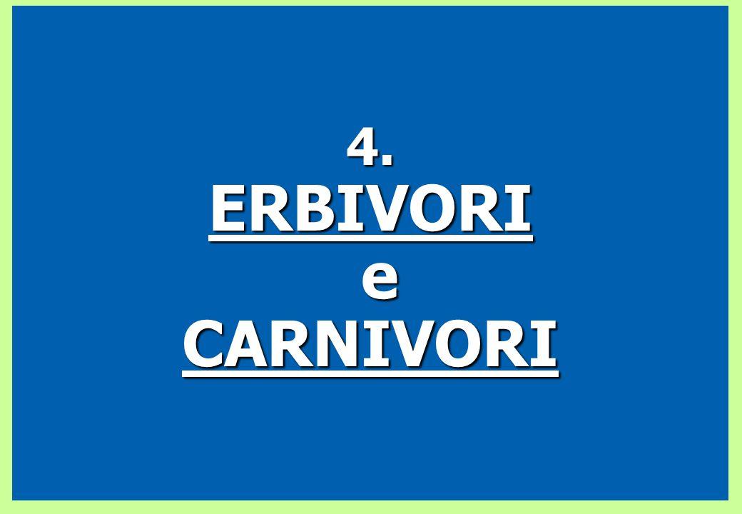 4.ERBIVORI eCARNIVORI