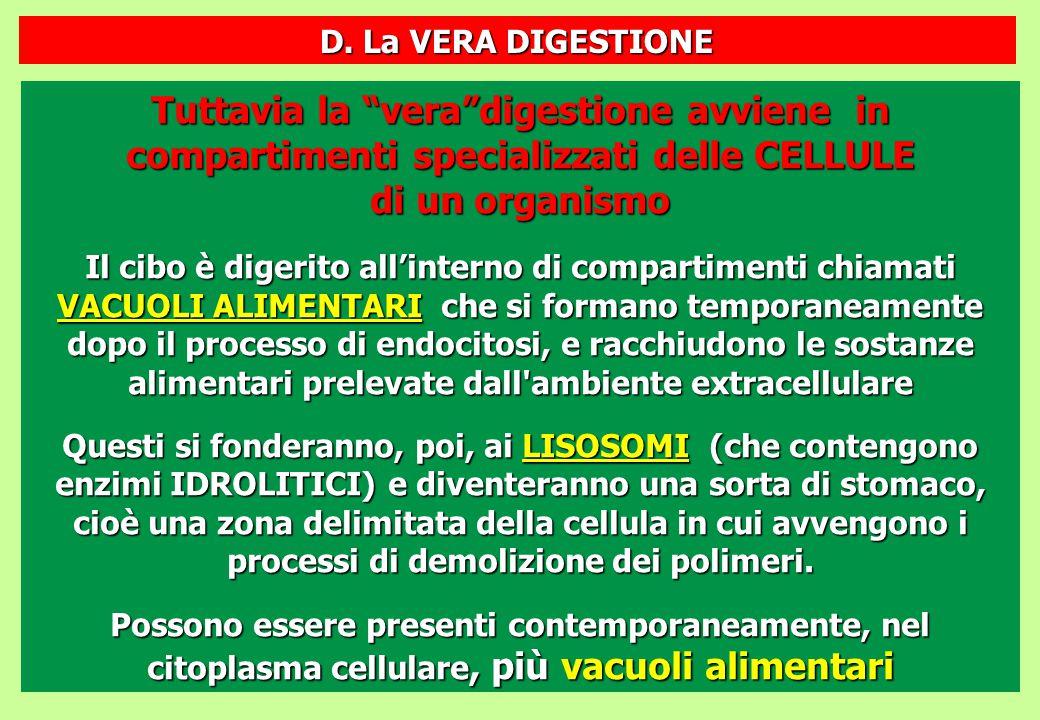"""Tuttavia la """"vera""""digestione avviene in compartimenti specializzati delle CELLULE di un organismo Il cibo è digerito all'interno di compartimenti chia"""