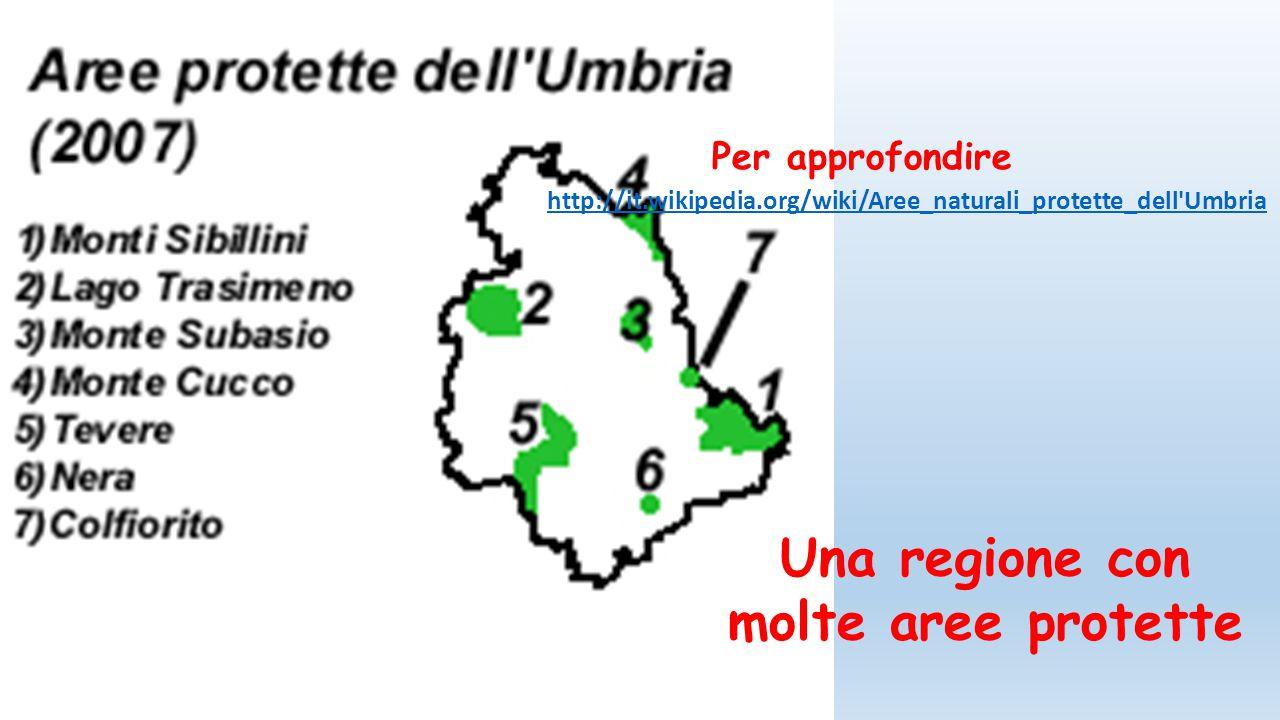 Le attività dell'uomo In Umbria si producono vini famosi e ottimo olio di oliva.