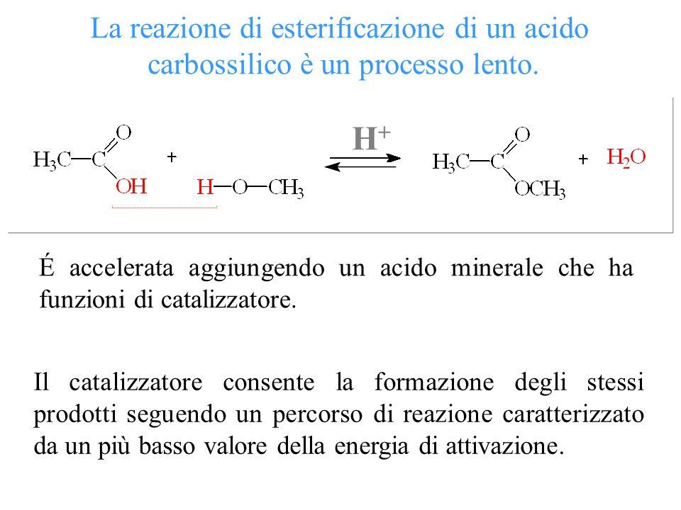 Ea di reazione non catalizzata Ea di reazione catalizzata Un catalizzatore abbassando** l'energia di attivazione di una reazione permette di reclutare, alla stessa temperatura, un maggior numero di molecole dotate di energia sufficiente a raggiungere lo stato di transizione.
