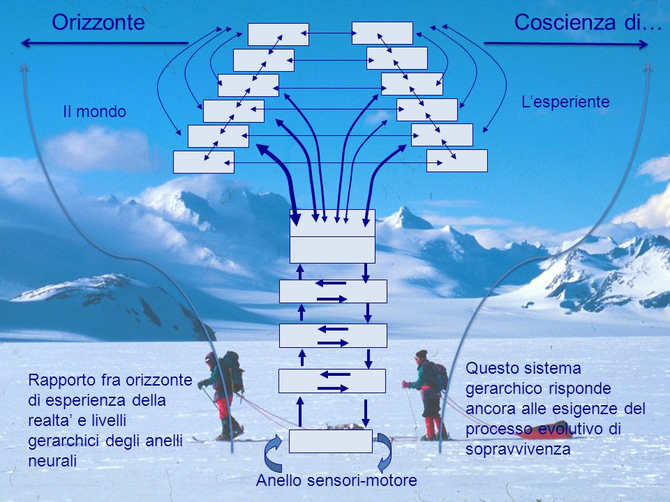 Rapporto fra orizzonte di esperienza della realta' e livelli gerarchici degli anelli neurali OrizzonteCoscienza di… Questo sistema gerarchico risponde ancora alle esigenze del processo evolutivo di sopravvivenza Il mondo L'esperiente Anello sensori-motore