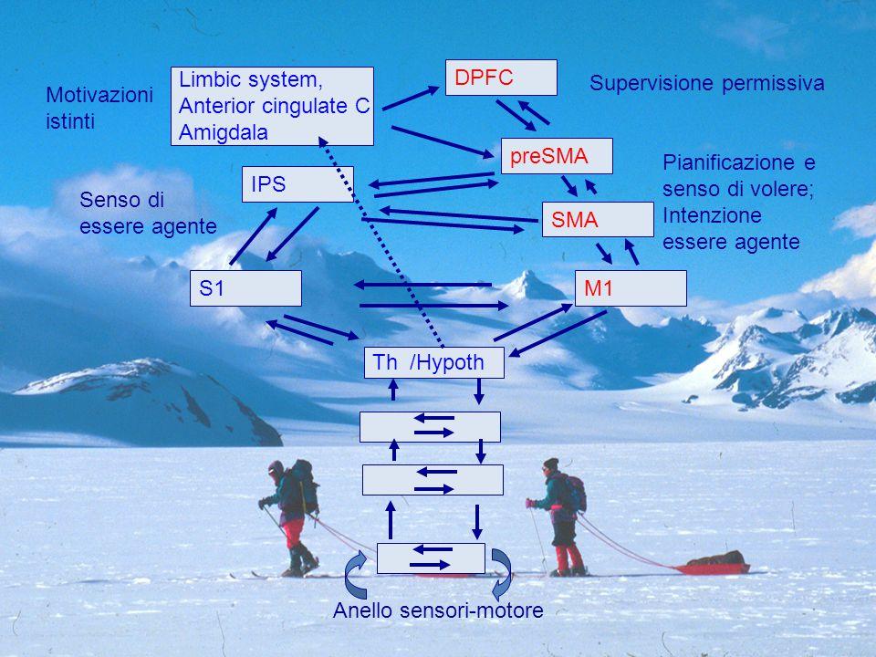 Th /Hypoth Anello sensori-motore M1S1 IPS SMA preSMA DPFC Limbic system, Anterior cingulate C Amigdala Motivazioni istinti Supervisione permissiva Pianificazione e senso di volere; Intenzione essere agente Senso di essere agente
