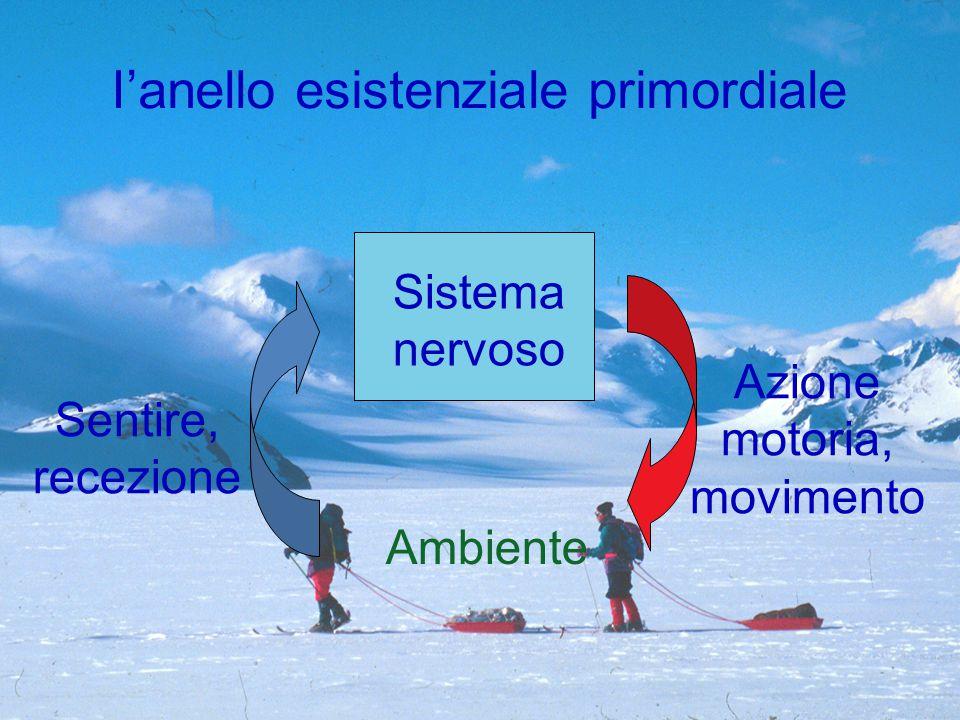 Sistema nervoso Ambiente Azione motoria, movimento Sentire, recezione I'anello esistenziale primordiale