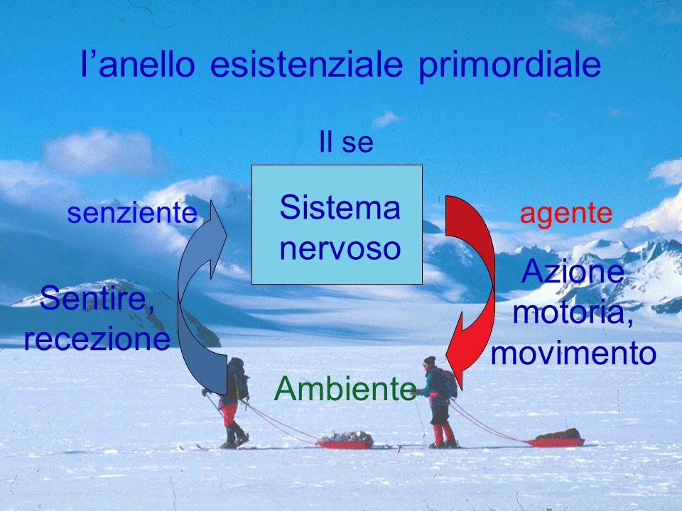 Sistema nervoso Ambiente Azione motoria, movimento Sentire, recezione I'anello esistenziale primordiale agentesenziente Il se