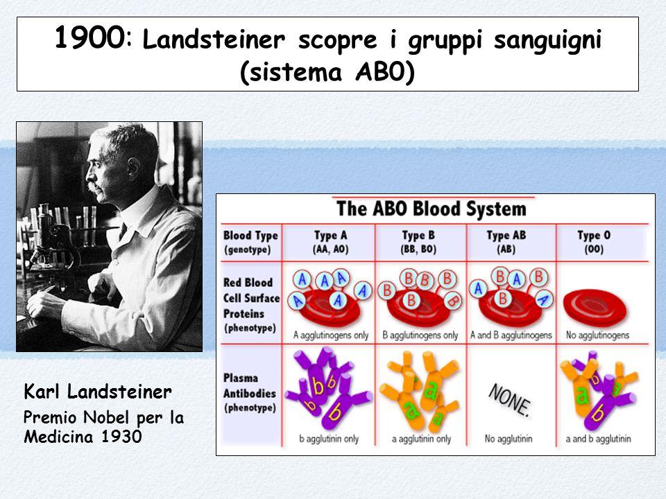 Karl Landsteiner Premio Nobel per la Medicina 1930 1900: Landsteiner scopre i gruppi sanguigni (sistema AB0)