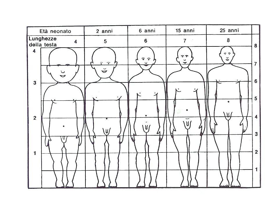 TORACE – APPARATO RESPIRATORIO – APPARATO CARDIO-CIRCOLATORIO diametri antero-posteriore, latero-laterale simili (coste a decorso orizzontale) primo atto respiratorio entro 30 sec (max entro 1'), con pianto respiro addominale(diaframmatico)
