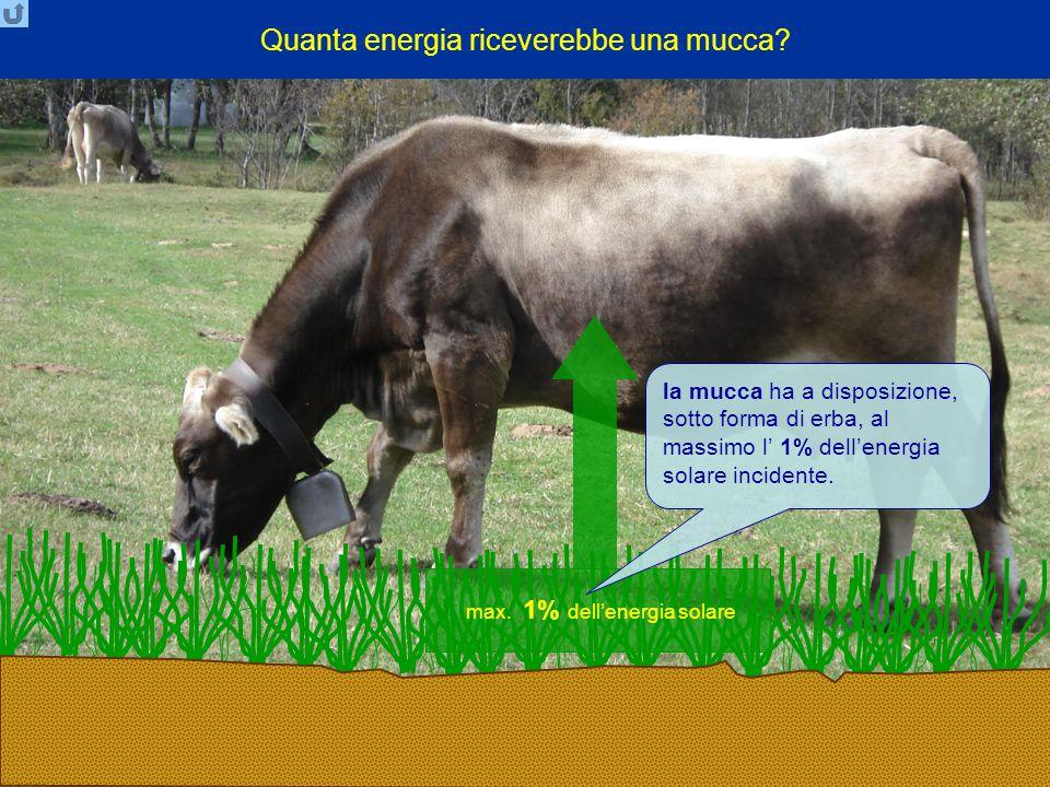 LiLu2, TT 2014 Ecosistemi: flusso energia 17 Quanta energia riceverebbe una mucca.