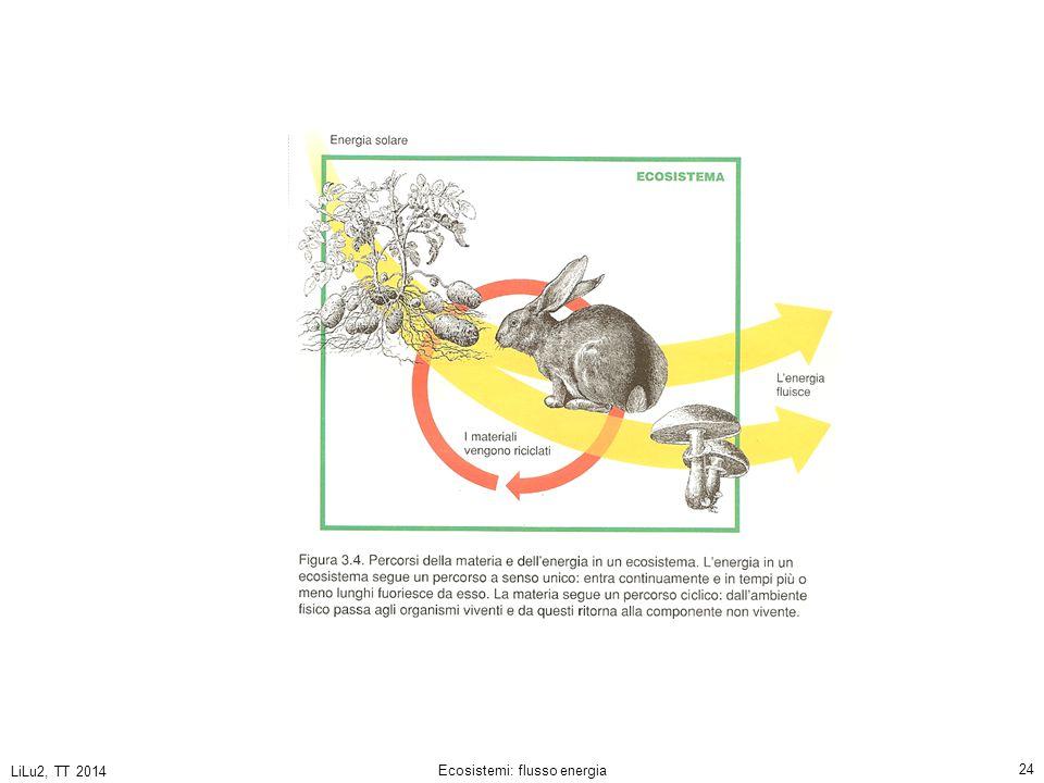 LiLu2, TT 2014 Ecosistemi: flusso energia 24
