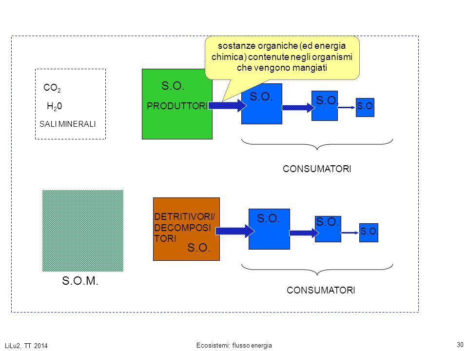 LiLu2, TT 2014 Ecosistemi: flusso energia 30 PRODUTTORI CONSUMATORI DETRITIVORI/ DECOMPOSI TORI CO 2 H20H20 SALI MINERALI S.O.