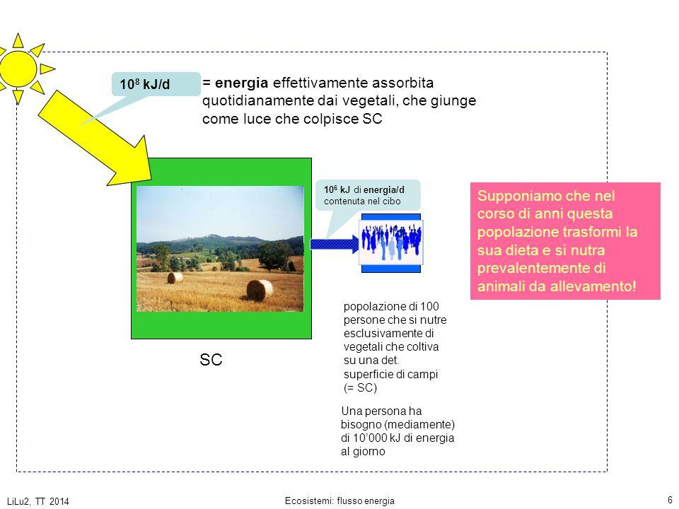 LiLu2, TT 2014 Ecosistemi: flusso energia 37