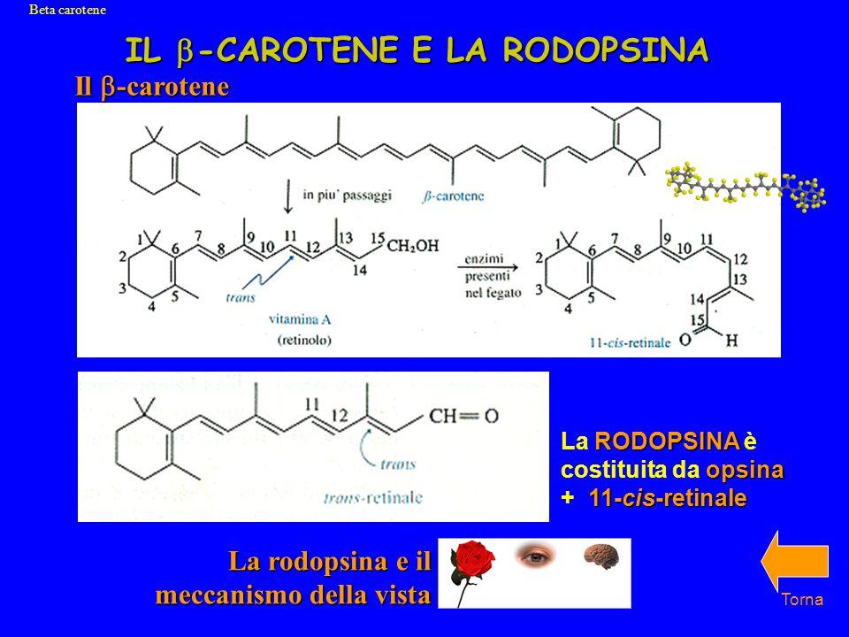 IL  -CAROTENE E LA RODOPSINA Torna Beta carotene Il  -carotene RODOPSINA opsina 11-cis-retinale La RODOPSINA è costituita da opsina + 11-cis-retinale La rodopsina e il meccanismo della vista