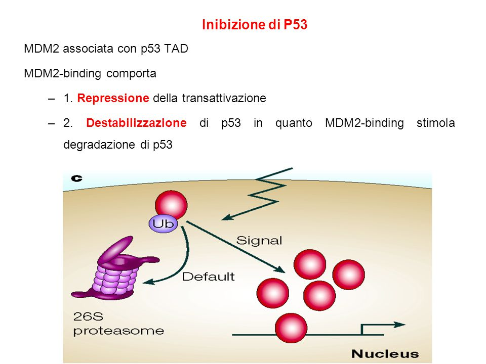 MDM2 associata con p53 TAD MDM2-binding comporta –1.