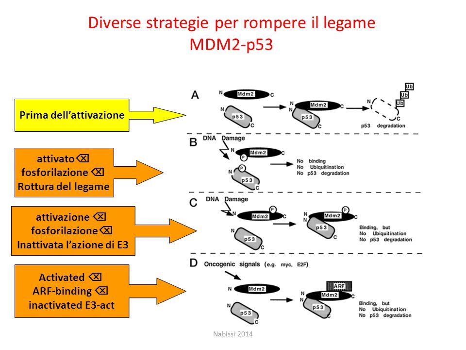 Diverse strategie per rompere il legame MDM2-p53 Prima dell'attivazione attivato  fosforilazione  Rottura del legame attivazione  fosforilazione  Inattivata l'azione di E3 Activated  ARF-binding  inactivated E3-act Nabissi 2014