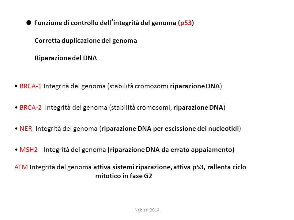 ● Funzione di controllo dell'integrità del genoma (p53) Corretta duplicazione del genoma Riparazione del DNA BRCA-1 Integrità del genoma (stabilità cromosomi riparazione DNA) BRCA-2 Integrità del genoma (stabilità cromosomi, riparazione DNA) NER Integrità del genoma (riparazione DNA per escissione dei nucleotidi) MSH2Integrità del genoma (riparazione DNA da errato appaiamento) ATM Integrità del genoma attiva sistemi riparazione, attiva p53, rallenta ciclo mitotico in fase G2 Nabissi 2014