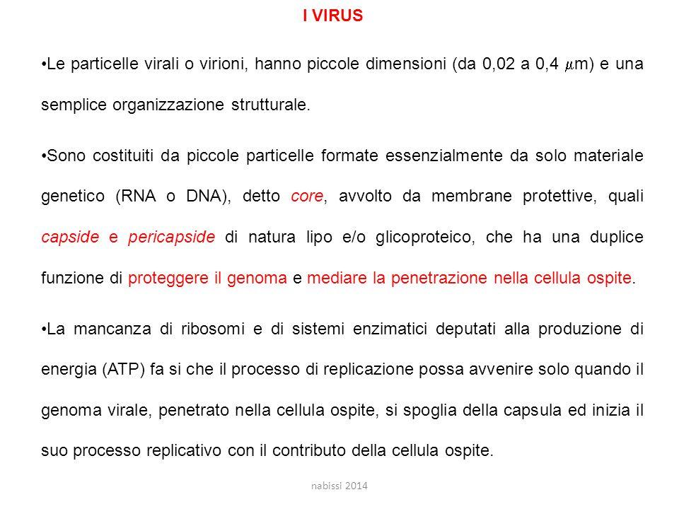 Le particelle virali o virioni, hanno piccole dimensioni (da 0,02 a 0,4  m) e una semplice organizzazione strutturale.