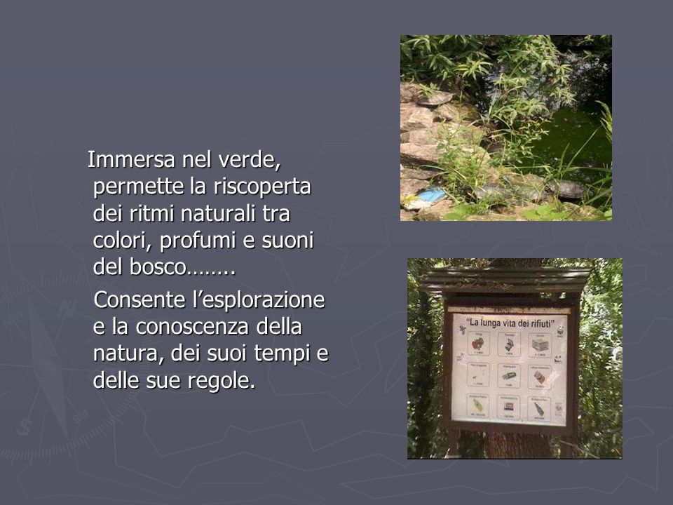 ll bosco è un luogo vivo, abitato da una flora ed una fauna che risentono fortemente della presenza dell'uomo.