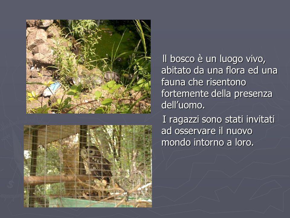 ll bosco è un luogo vivo, abitato da una flora ed una fauna che risentono fortemente della presenza dell'uomo. ll bosco è un luogo vivo, abitato da un